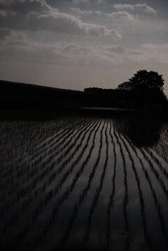 月明かりの水田