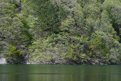 緑の森と緑の湖
