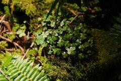 森の妖精たち