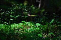 スポットライト:深い森の小さなステージ