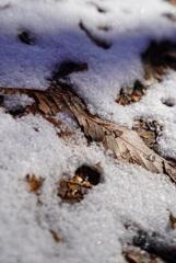 追想:厳冬の朝