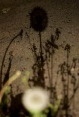 たんぽぽと草の夜
