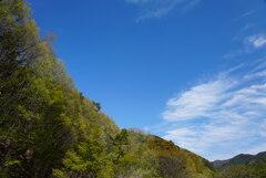 春の森と春の空