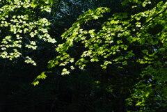 日光と若葉の饗宴