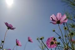 陽光と秋の空