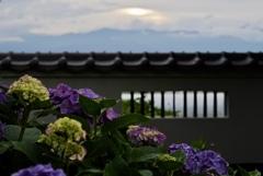 北アルプスの夕暮れ;法船寺の紫陽花と共に眺める