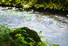 ある川辺の風景