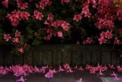 咲く、散る、その全てが美しい
