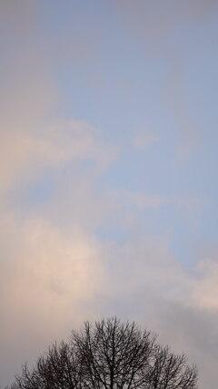 夕刻の空とカラマツ