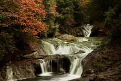 しっとり秋色に滝