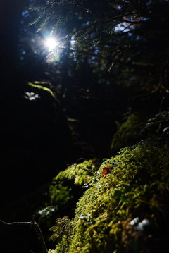 原生林へ届く光