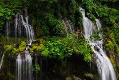 滝と植物の饗宴;新緑の吐竜の滝