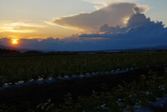 セロリ畑からの夕暮れ*2