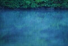 早朝のある池の風景