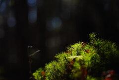 滋養の陽光〜白駒の森の原生林にて〜