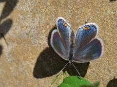 昭和記念公園で見かけた昆虫 − 1