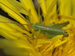 昭和記念公園で見かけた昆虫 − 4