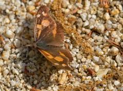 昭和記念公園で見かけた昆虫 − 5