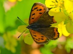 昭和記念公園で見かけた昆虫 − 3