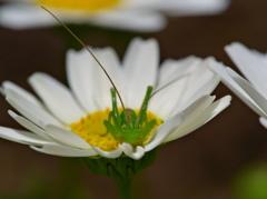 昭和記念公園で見かけた昆虫 − 2