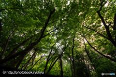 森林浴-初めての広角レンズ