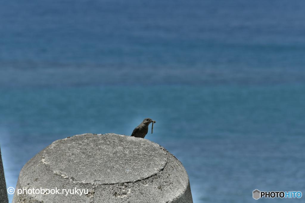 HDRで鳥の撮影…