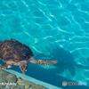 水底(ミナソコ)と亀