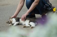 猫をダメにする人