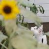 お花と猫「視線の先」編