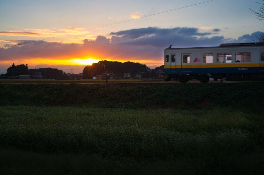蕎麦の花畑の夕暮れ