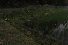 fireflies 1st take on 13,Jun 2021