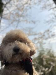 愛犬16度目の春
