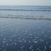 波のカーペット