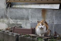 三毛猫、こちらに気付く。