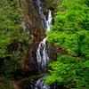 細滝と新緑