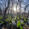 マクンベツ湿原の朝1