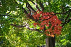 秋の始まり2