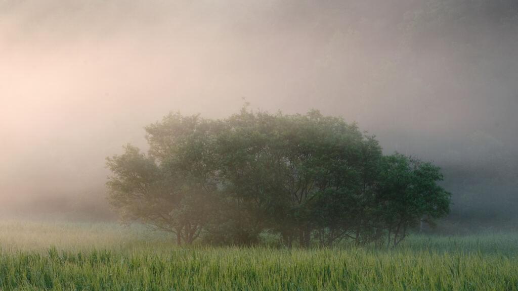 霧の中の風景
