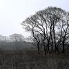 湿原の樹木