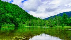 新緑の明神池