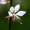 二ヶ領用水の花24