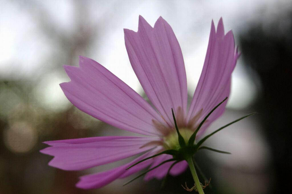 秋を彩る花達2