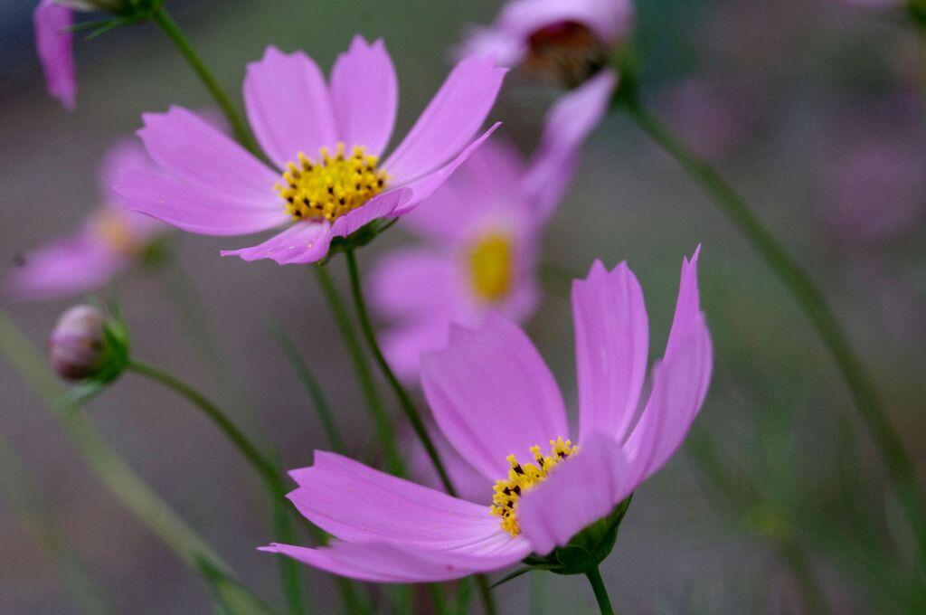 秋を彩る花達3