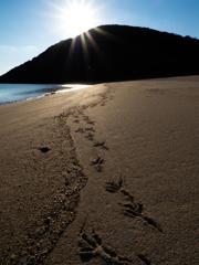 海辺の時間