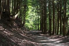 木漏れ日の林道散策