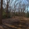 冬の公園 (2)