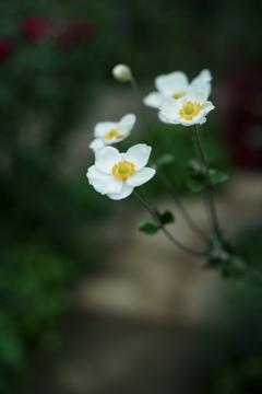 花だより~横浜イングリッシュガーデンより~