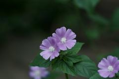 花だより~横浜イングリッシュガーデンにて~
