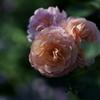 花だより~花菜ガーデンにて~