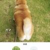 ガマと認識された愛犬(^.^)